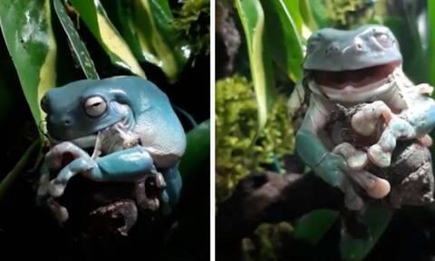 Είδε τον βάτραχό της να τρώει το δέρμα του κι έπαθε σοκ. Δεν φαντάζεστε τον λόγο... (video)
