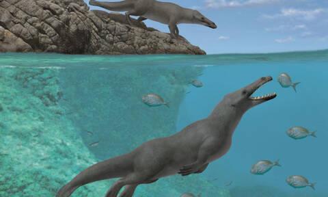 Εντυπωσιακή ανακάλυψη: Βρέθηκε φάλαινα που περπατούσε στην ξηρά! (pics+vids)