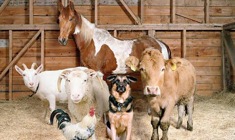 Θα τρελαθείς με αυτά τα ζώα!
