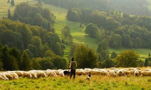 Σε απόγνωση οι αγρότες: Kίνδυνος να χαθούν οι επιδοτήσεις