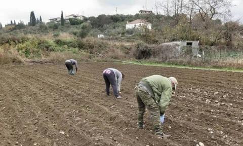Αγροτικές επιδοτήσεις: Αυτοί θα εξοφληθούν πριν από το Πάσχα