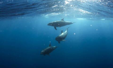 Τα θηλυκά δελφίνια έχουν... κλειτορίδα και φτάνουν σε οργασμό!