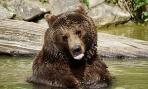 Η αρκούδα που χορεύει trance και έχει «ρίξει» το διαδίκτυο (video)