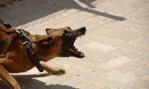 Ηλεία: Πανικός σε εστιατόριο - Σκύλος όρμησε σε κοριτσακι 2,5 ετών