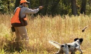 На Кипре меняются правила содержания охотничьих собак