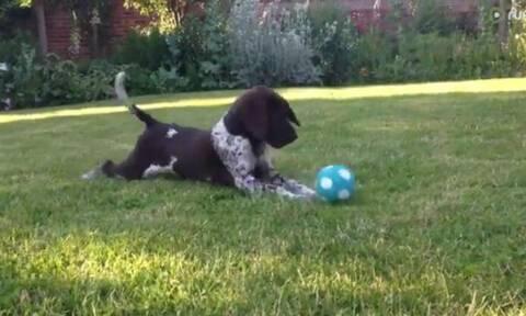 Δίνουν σε ένα αξιολάτρευτο κουτάβι μια μπάλα που «μιλάει» - Δείτε την επική αντίδρασή του!