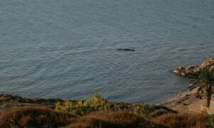 Θρίλερ στη Χίο: Βρέθηκε πτώμα σε παραλία