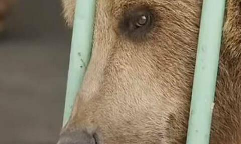 Αρκούδα… βαρυποινίτης σε φυλακή υψίστης ασφαλείας (pics)