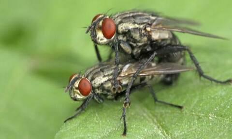 Πώς θα εξολοθρεύσετε τις μύγες από το σπίτι σας! (photos)