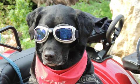 Το ανέκδοτο της ημέρας: Η πορεία και ο σκύλος