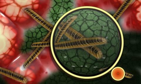 Παγκόσμιος τρόμος για επικίνδυνο μικρόβιο - Τι σχέση έχουν τα ξενοδοχεία