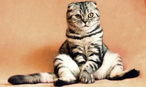 Γιατί ο Μαλιάτσης ανακρίνει μια γάτα;