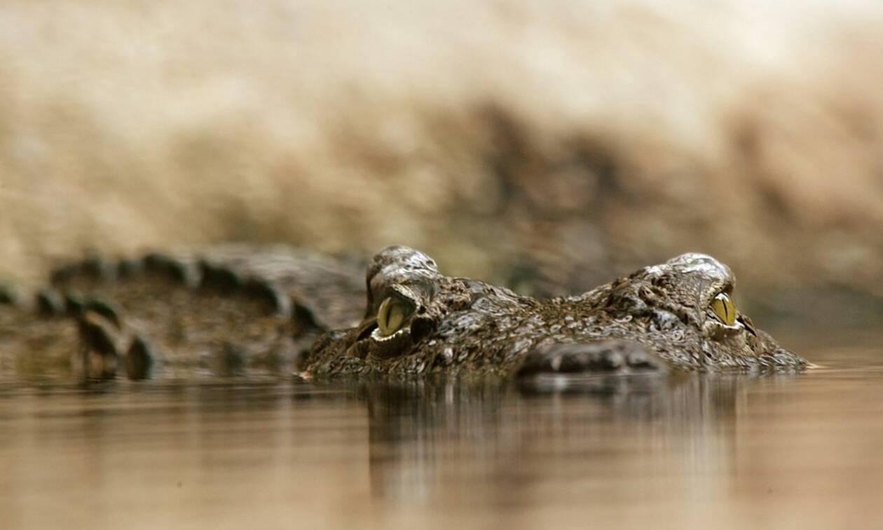 Τρόμος: Κόλλησαν σε βάλτο με κροκόδειλους – Η κίνηση που τους έσωσε (pics)