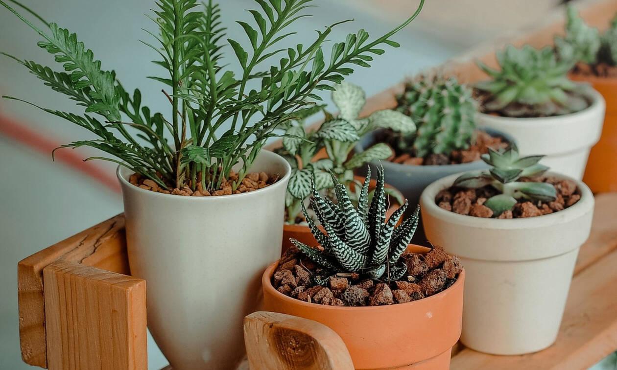 8 φυτά που ανανεώνουν την ατμόσφαιρα του σπιτιού σου