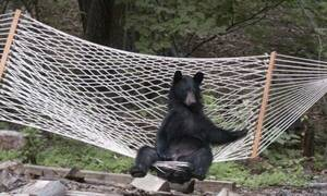 Αρκούδα βρίσκει μια αιώρα και της… αλλάζει τα φώτα!
