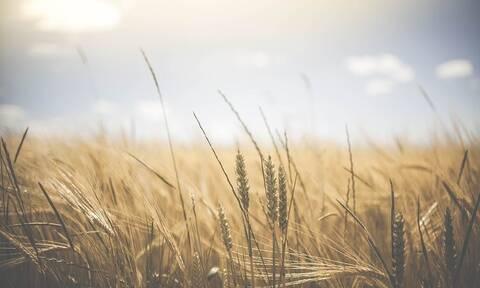 ΕΦΚΑ: Παράταση για εισφορές αγροτών