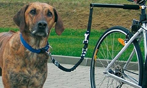 Εκπληκτικό: Αυτός ο σκύλος κάνει κάτι απίστευτο! (vid)