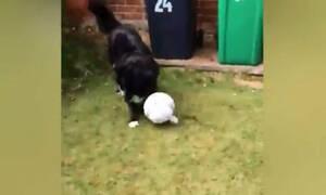 Σκύλος παίζει ποδόσφαιρο σαν κανονικός άνθρωπος και γίνεται viral (video)