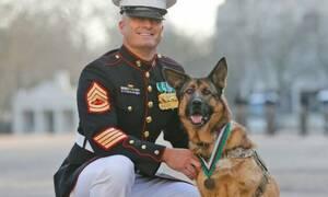 Σκύλος βλέπει το αφεντικό του που γύρισε από τον πόλεμο και… σεληνιάζεται! (video)