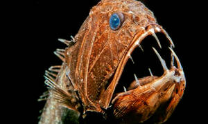 Τα πιο τρομακτικά ψάρια που υπάρχουν στον κόσμο! (pics)