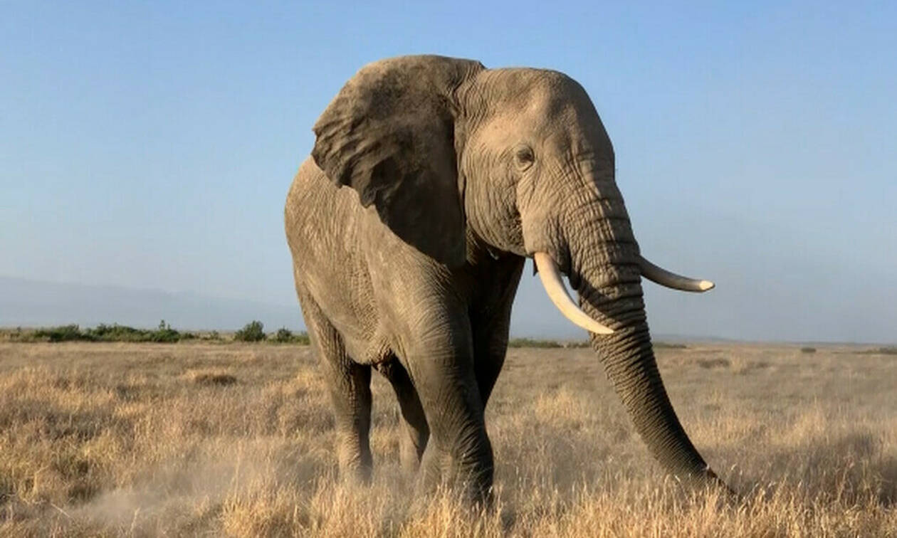 Έχεις ακούσει ποτέ ελέφαντα να φτερνίζεται; (pics+vid)