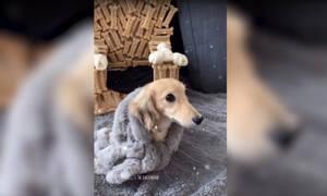 Δεν θα το πιστεύετε ποια είναι η αγαπημένη θέση αυτής της σκυλίτσας! (vid)