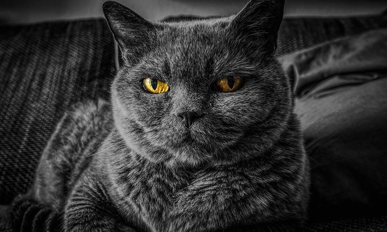 Γάτα - νίντζα τα βάζει με αγέλη σκύλων - Δεν φαντάζεστε τι έγινε (pics)