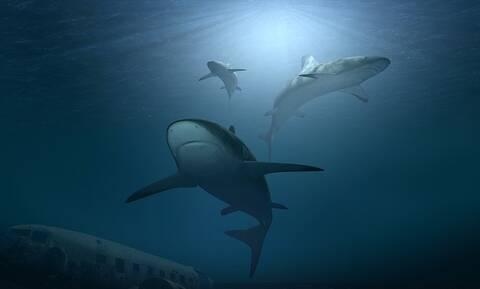 Φωτογραφία - ΣΟΚ: Αυτό που είδαν μέσα στο νερό δεν θα το ξεχάσουν ποτέ (pics)