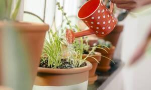 Τα αυγά βοηθούν το ph των φυτών σου