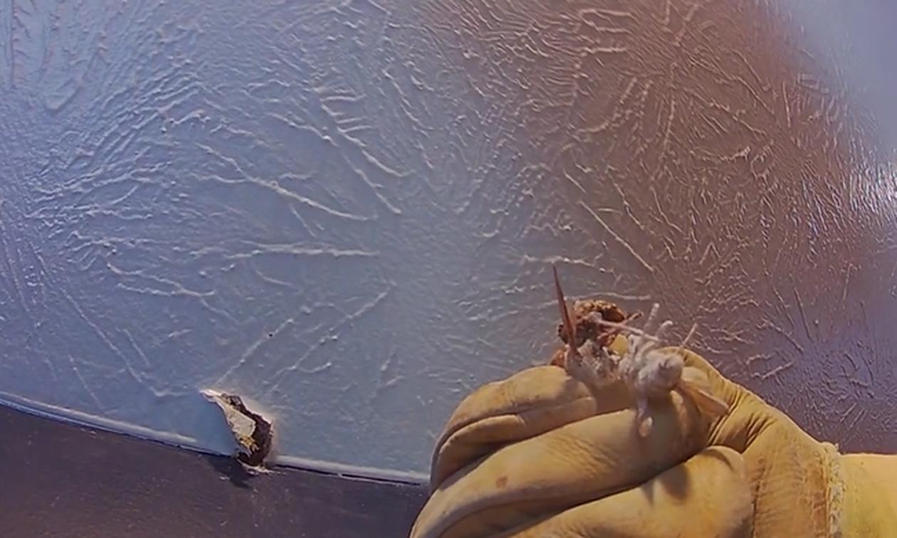 Ακουγαν θορύβους καθημερινά στο σπίτι τους. Οταν άνοιξαν τρύπα στον τοίχο έπαθαν σοκ (Video)