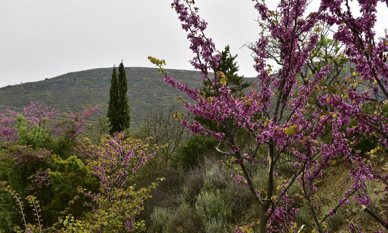 Καιρός Πάσχα 2019 - Αρνιακός στο Newsbomb.gr: Με 25αρια θα σουβλίσουμε τον οβελία - Πού θα βρέξει