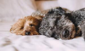 Ο σκύλος σου σε βοηθάει να κοιμάσαι καλύτερα!
