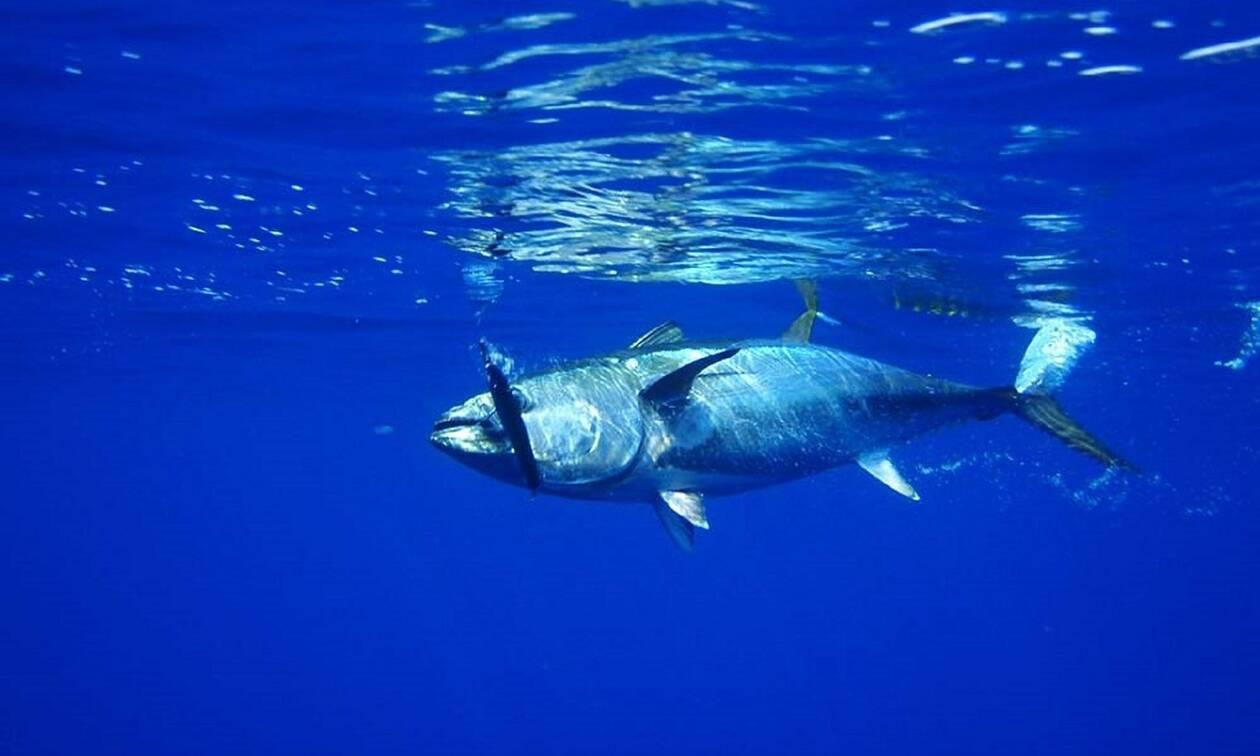 Νάξος: «Πάγωσαν» όταν είδαν το «θηρίο» που έβγαλαν από τη θάλασσα (pics)
