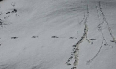 Στρατός εντόπισε μυθικό πλάσμα - Σάλος με τις φωτογραφίες του Γέτι