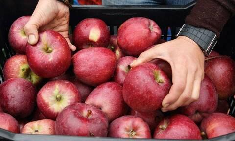 Νορβηγία: Βάζουν τα πεσμένα μήλα σε σακούλες, τις κρεμάνε σε φράχτη κεντρικού δρόμου και διατίθενται