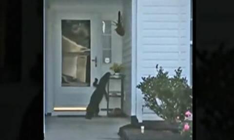 Αλιγάτορας χτύπησε το κουδούνι σπιτιού σαν... κανονικός κύριος! (vid)