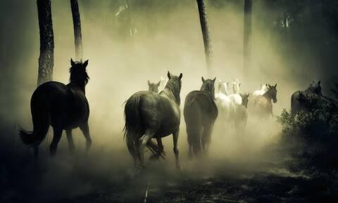 Πώς ο άνθρωπος κατάφερε να αλλάξει τα άλογα μέσα σε λίγους αιώνες