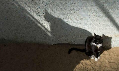 Ζώα σε ρόλο... Τζέιμς Μποντ: Δελφίνια, γάτες και νυχτερίδες κατάσκοποι
