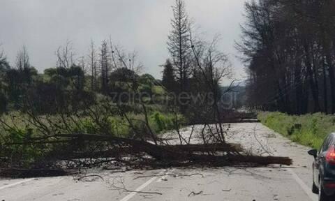 Θυελλώδεις άνεμοι «χτυπούν» την Κρήτη: Σήκωσαν τραπέζια από μπαλκόνια και έριξαν δέντρα (pics)