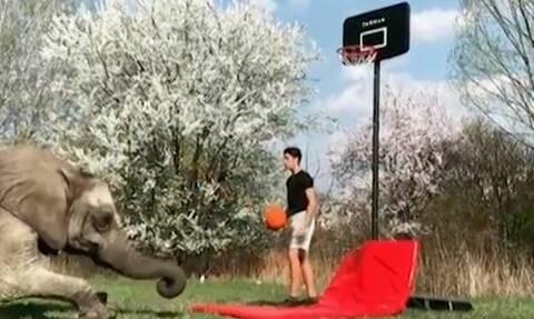 Επικό βίντεο! Ελέφαντες σκοράρουν σε... υπαίθριο γήπεδο μπάσκετ