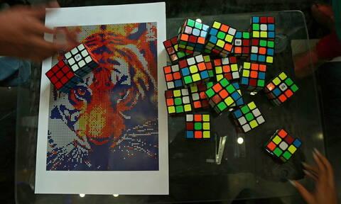 Τι σχέση μπορεί να έχει ο κύβος του Ρούμπικ με μία τίγρη; Δείτε τις φωτογραφίες