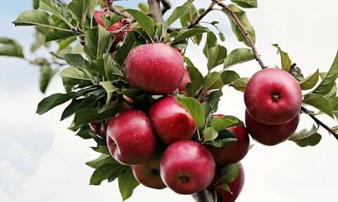 ΟΠΕΚΕΠΕ: Μέχρι 17 Μαΐου οι υποβολές των διορθωτικών για τις βιολογικές καλλιέργειες
