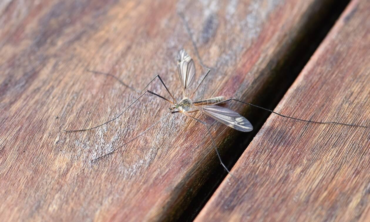 Απίστευτο: Δείτε τι θα συμβεί αν «ταΐσετε» ζάχαρη τα κουνούπια! (pics)