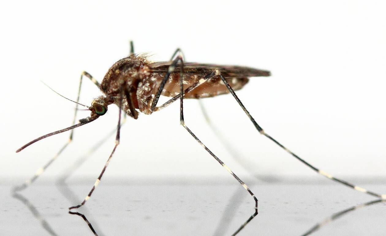 mosquito-83639_1920.jpg