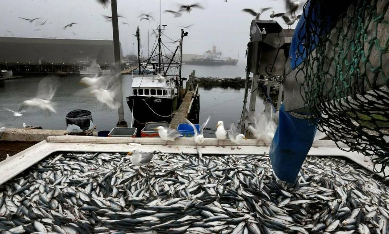 Χίος: Ο ψαράς έμεινε για ώρες άφωνος με αυτό που έβγαλε από τη θάλασσα (pics)
