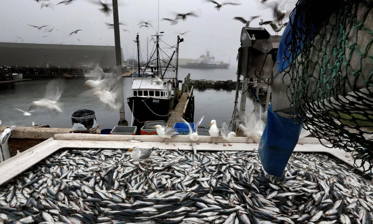 Χίος Τα είδε όλα ο ψαράς με αυτό που έβγαλε από τη θάλασσα