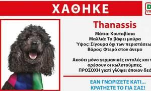 Εκλογές 2019: Δεύτερο σποτ των ΑΝΕΛ - Χάθηκε ο... Thanassis