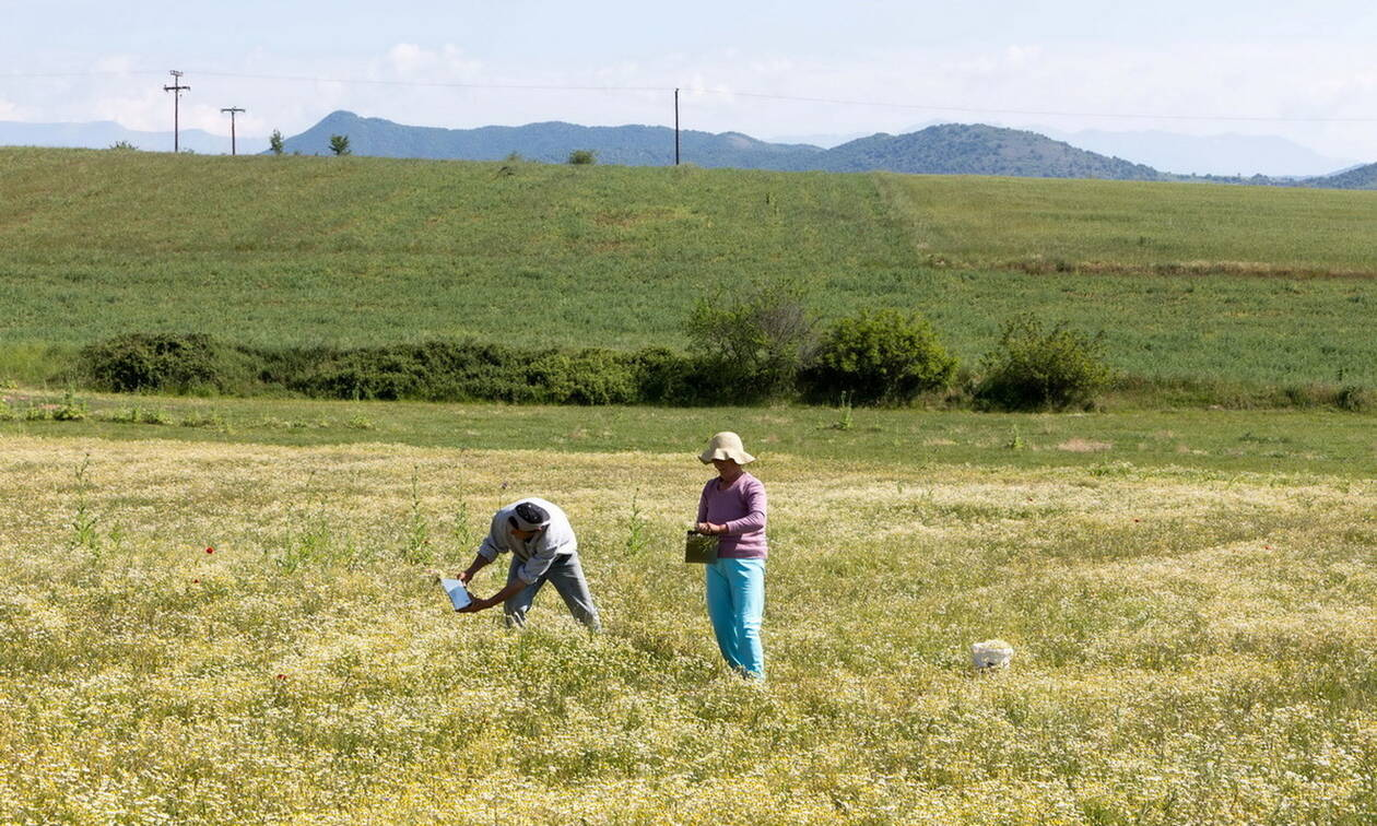 Διευκολύνσεις στους αγρότες σχετικά με τη φορολογία του εισοδήματός τους
