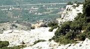 Το μακρινό ταξίδι του γύπα «Αλέξη» και η επιστροφή του στο Μεσολόγγι