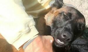 Σκύλος κολύμπησε 10 χλμ. και περπάτησε άλλα 19, για να βρει την οικογένειά του (photos)